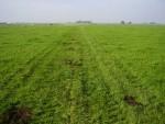 Sleufloze en spoorloze drainage (5)